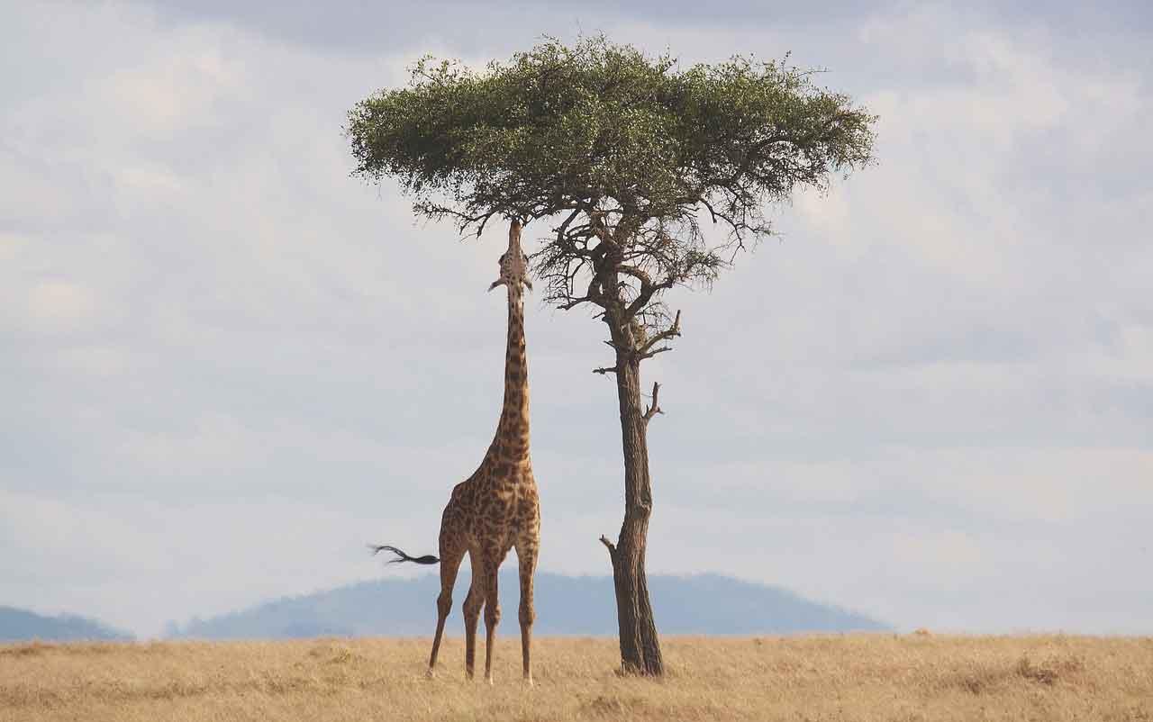migliori destinazioni safari