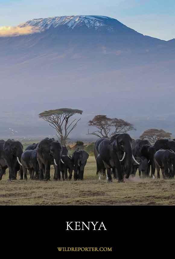 1-Kenya-dest