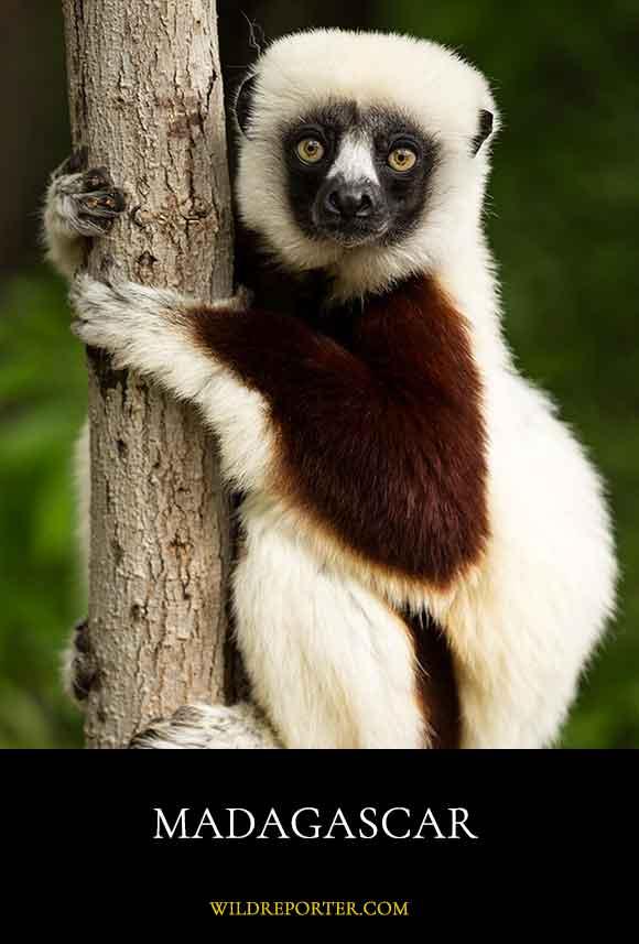 1-Madagascar-dest
