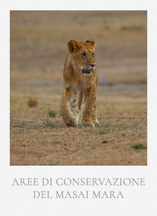aree di conservazione private del Masai Mara